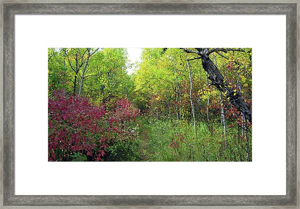 Path In The Woods 8 Framed Print
