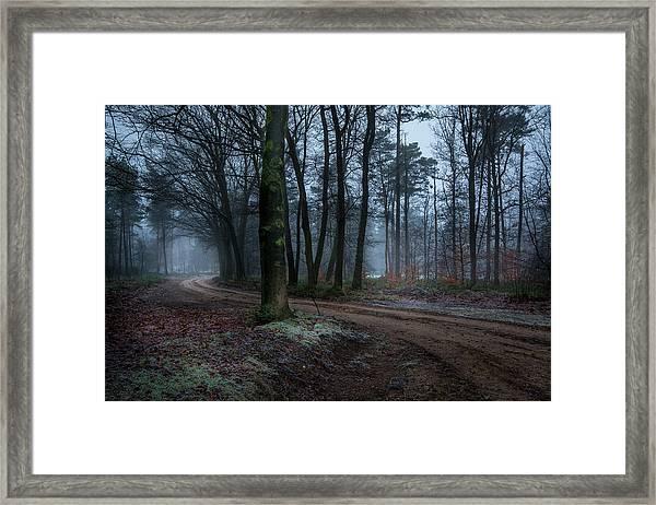 Path Through The Forrest Framed Print