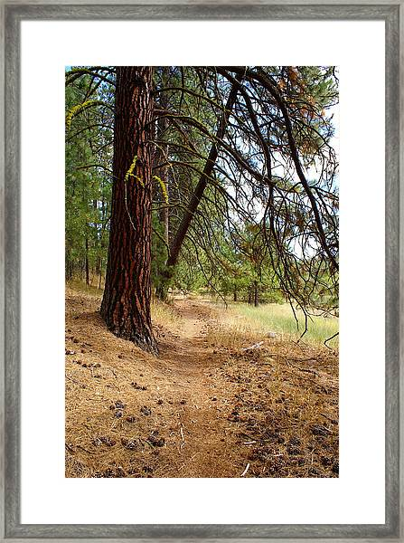 Path To Enlightenment 2 Framed Print