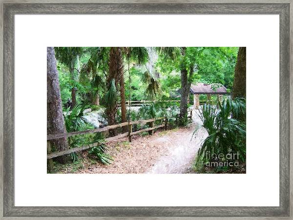 Path To Shade Framed Print