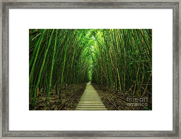 Path To Zen Framed Print