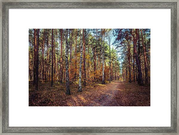 Pathway In The Autumn Forest Framed Print