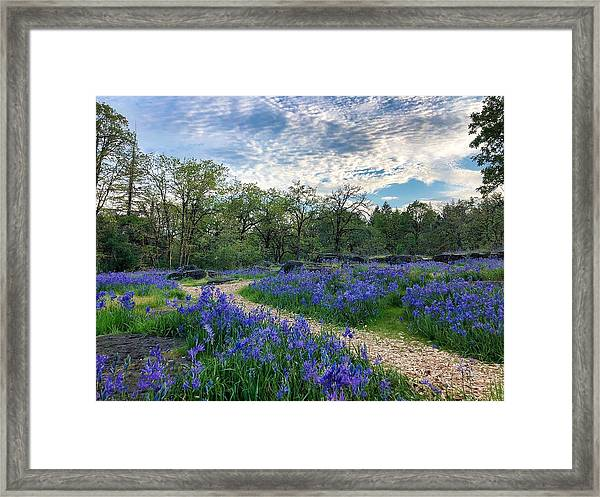 Pathway Through The Flowers Framed Print