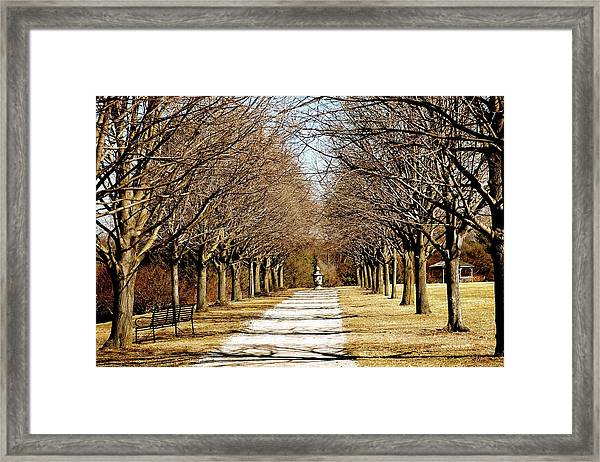 Pathway Through Trees Framed Print