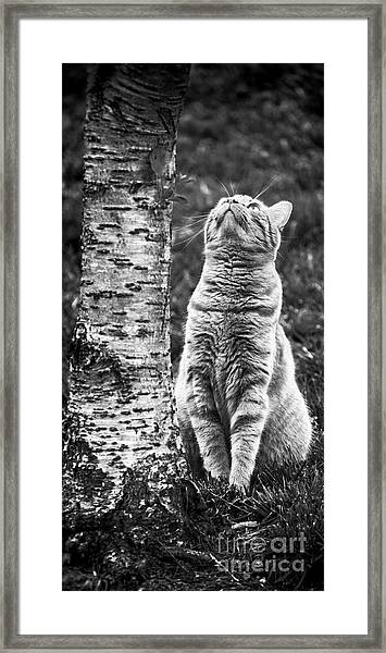 Patience 1020 Framed Print