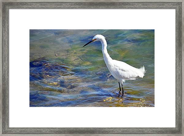 Patient Egret Framed Print