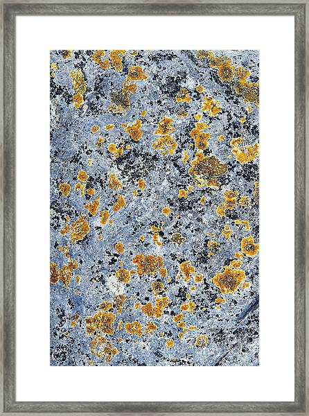 Pattern In Lichen  Framed Print