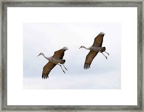 Pattern Of Two Framed Print