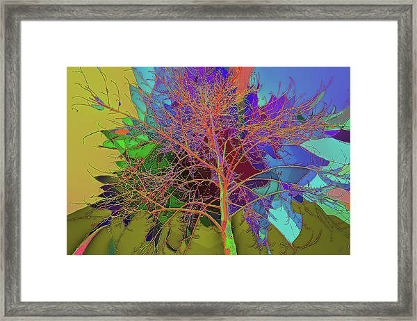 P C C Elm In The Wait Of Bloom Framed Print