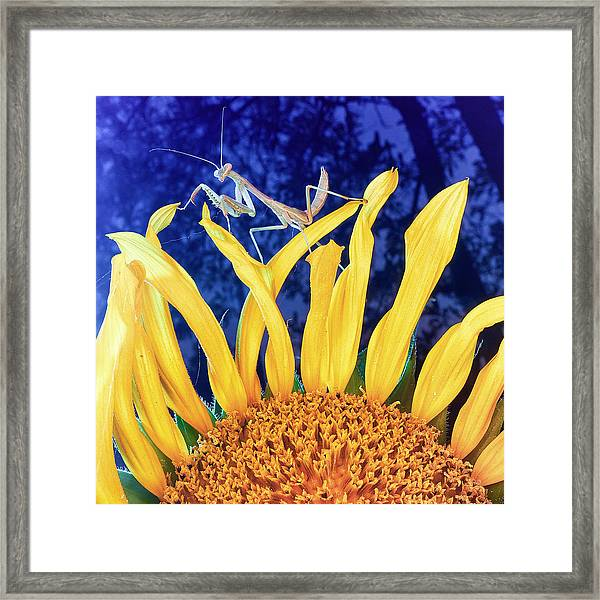 Peace Brings Death Framed Print