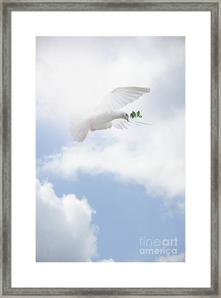 Peace Framed Print