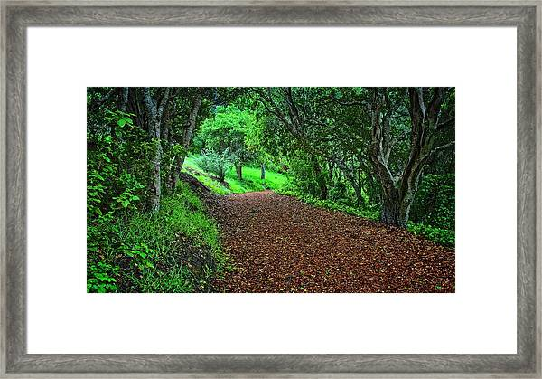Peace Of Heaven On Earth, Carmel, California Framed Print