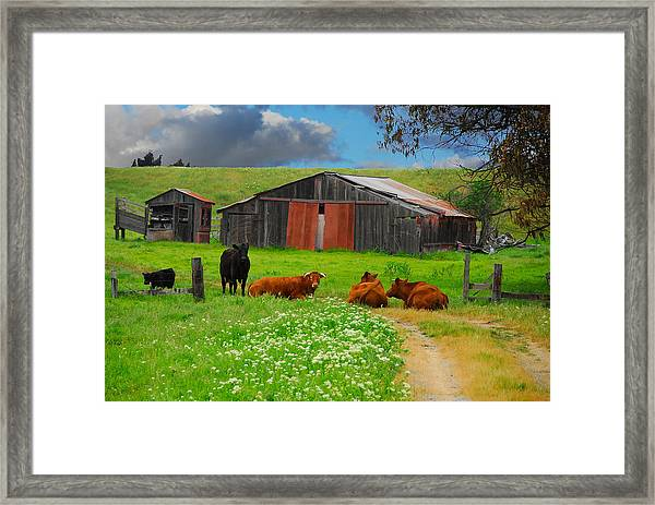 Peaceful Cows Framed Print