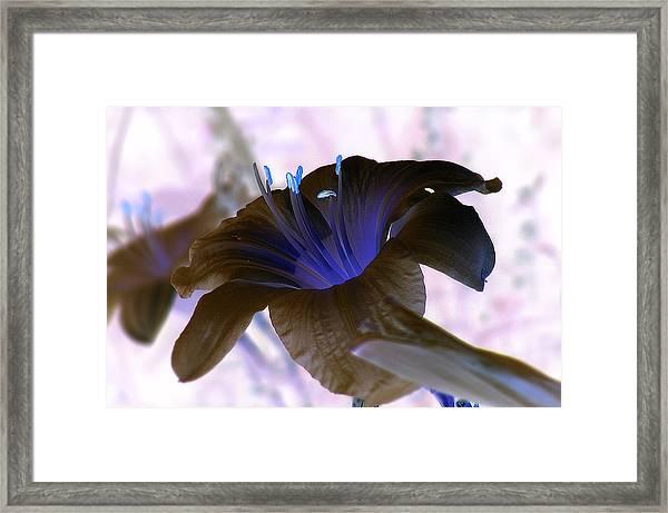 Peaceful Glow Framed Print by Sherwanda Irvin