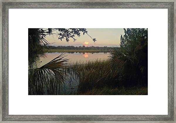 Peaceful Palmettos Framed Print