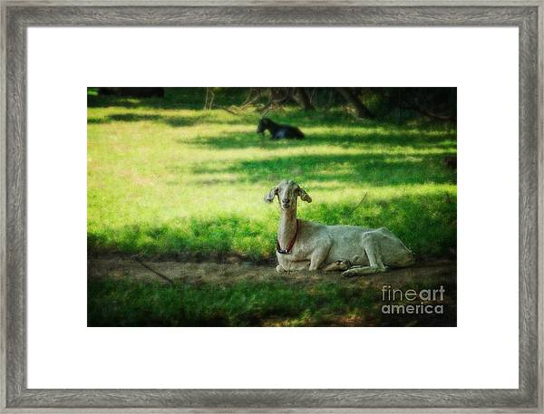 Peaceful Pasture Framed Print