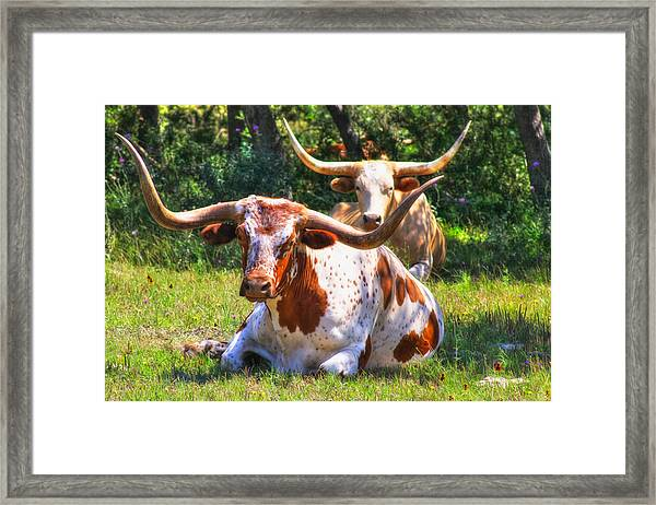 Peaceful Weapons Framed Print