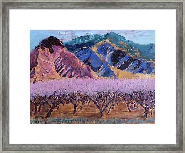 Peach Orchard Canigou Framed Print
