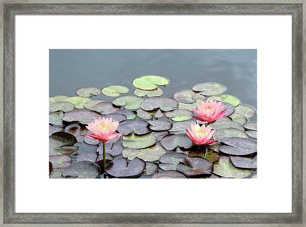 Peach Framed Print