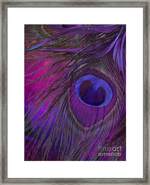 Peacock Candy Purple  Framed Print