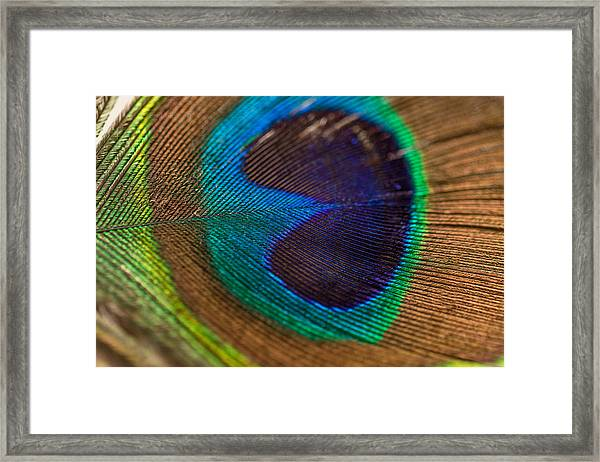 Peacock Feather Macro Detail Framed Print