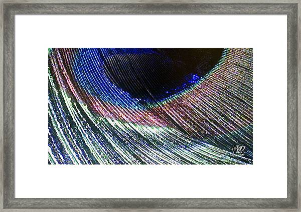 Peacock Feather Framed Print by Michele Caporaso