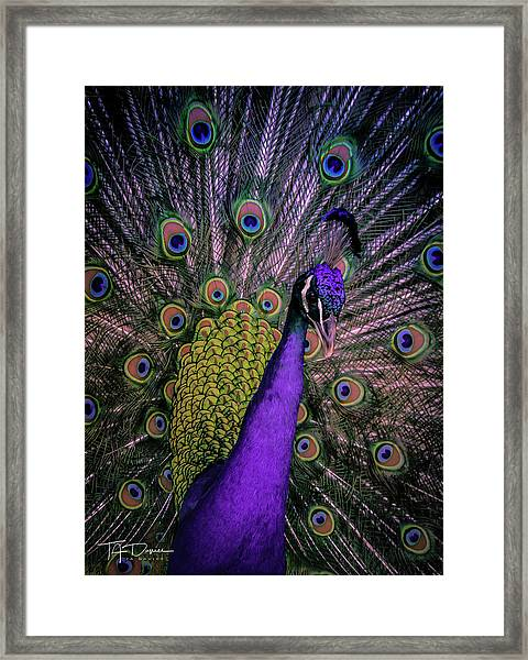Peacock In Purple Framed Print