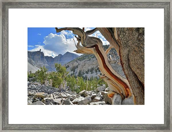 Peak Bristlecone Pine Framed Print