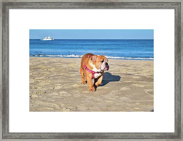 Peanut On The Beach Framed Print
