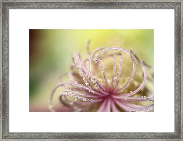 Pearly Curls Framed Print