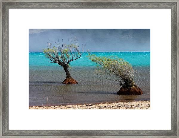 Peculiar Trees Framed Print