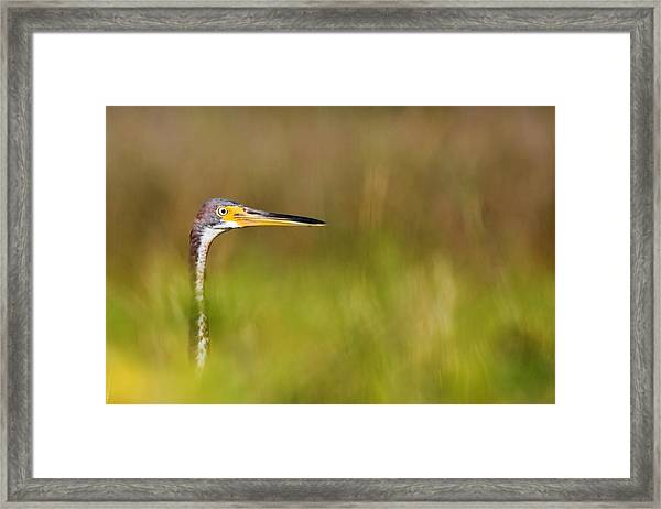 Peek-a-boo Birdie Framed Print