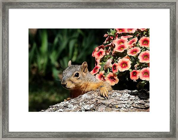 Peek-a-boo Squirrel Framed Print