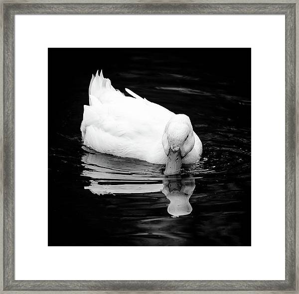 Peek-ing Duck Framed Print