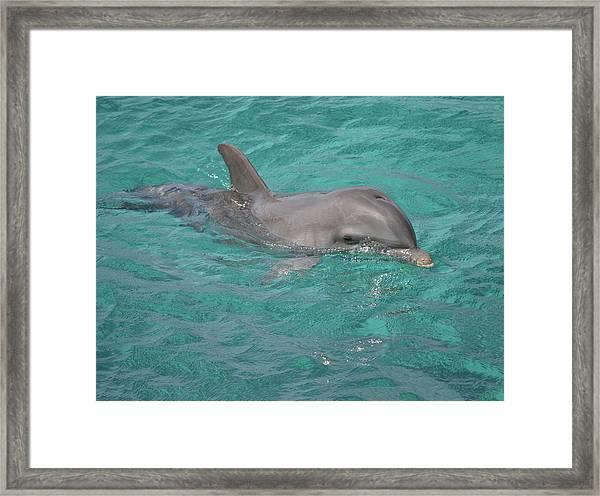 Peeking Dolphin Framed Print