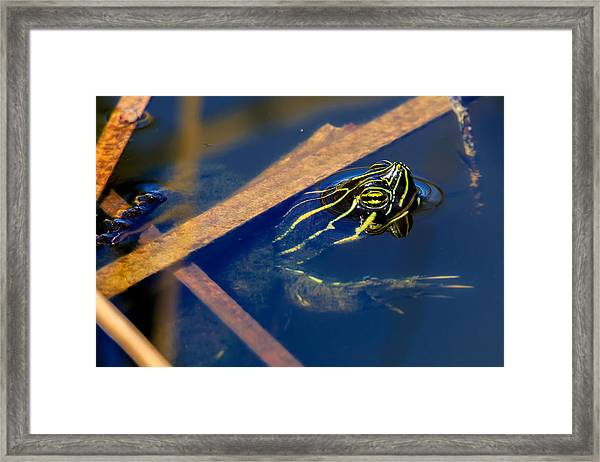 Peeking Out Framed Print