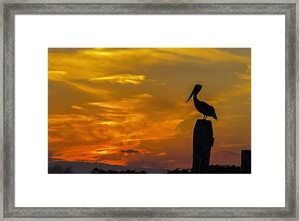 Pelican At Silver Lake Sunset Ocracoke Island Framed Print