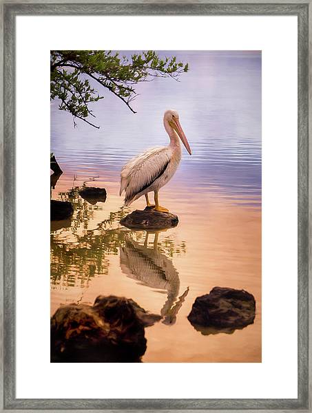 Pelican Connection 2 Framed Print