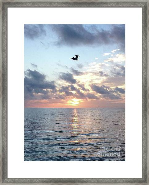 Framed Print featuring the photograph Pelican Dawn by Barbara Von Pagel