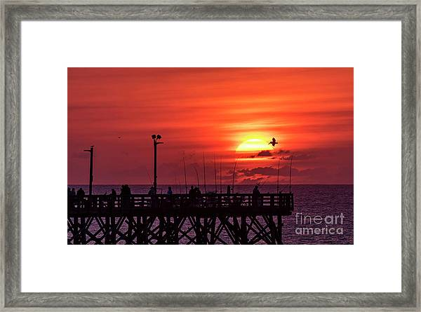 Framed Print featuring the photograph Pelican by DJA Images