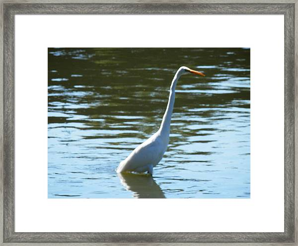 Pelican Emerging Framed Print