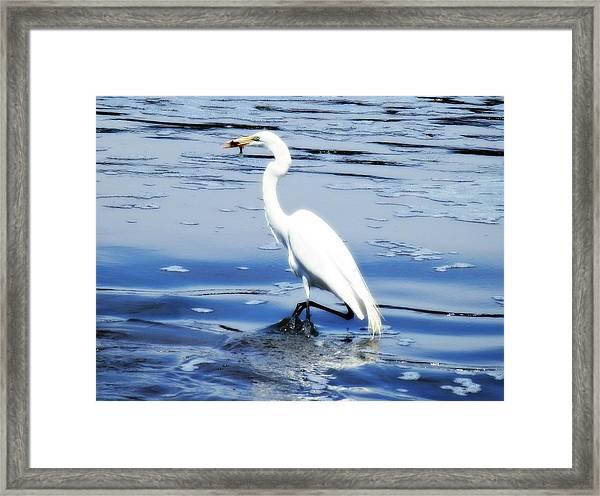 Pelican In It's Glory Framed Print