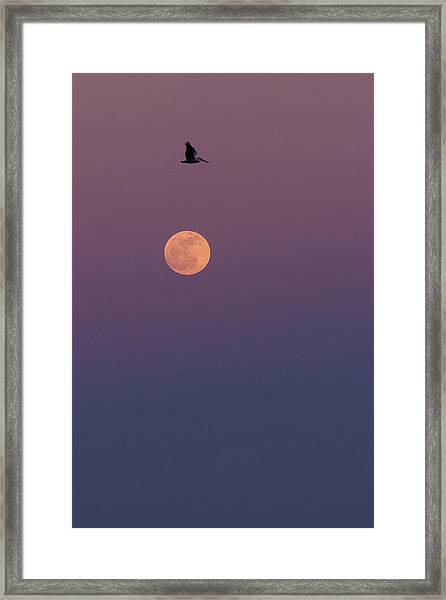 Pelican Over The Moon Framed Print