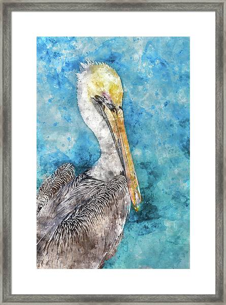 Pelican With Blue Ocean Background Framed Print