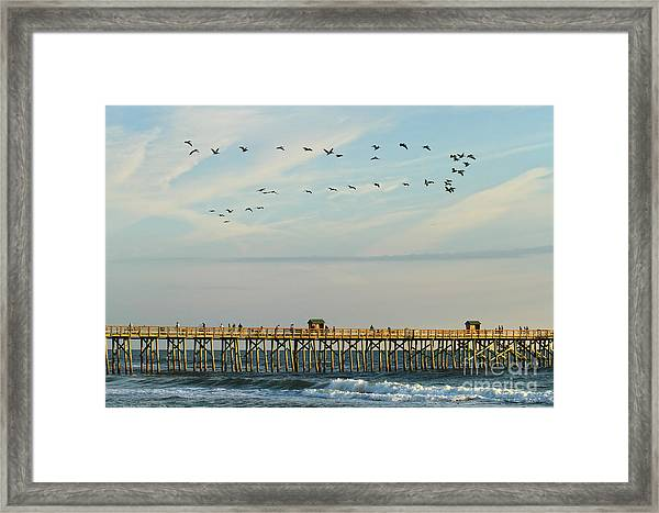Pelicans At Flagler Beach Framed Print