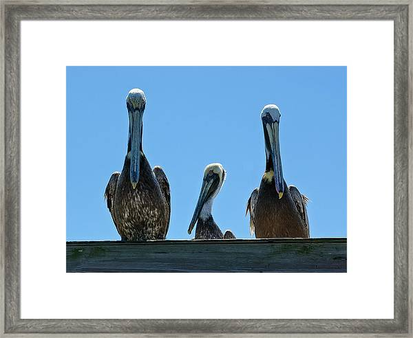 Pelicans At The Kure Beach Fishing Pier 2006 Framed Print
