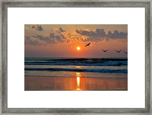 Pelicans On The Move Framed Print