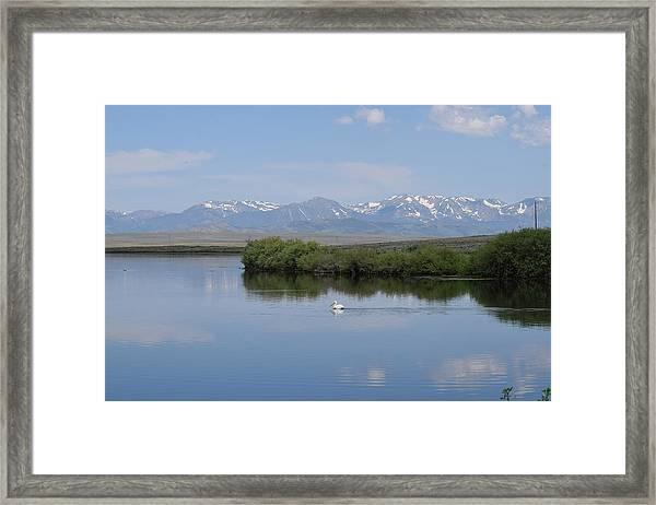 Pelicans Walden Res Walden Co Framed Print
