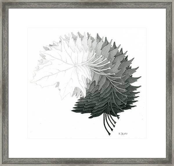 Pencil Drawing Of Maple Leaves Framed Print