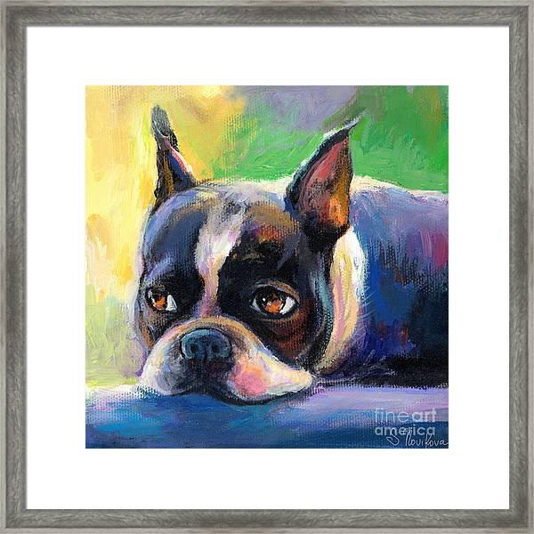 Pensive Boston Terrier Dog Painting Framed Print